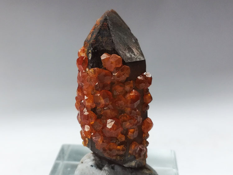 Smoky Quartz and manganese aluminum garnet mineral crystal gem stone ore samples,Garnet,Quartz